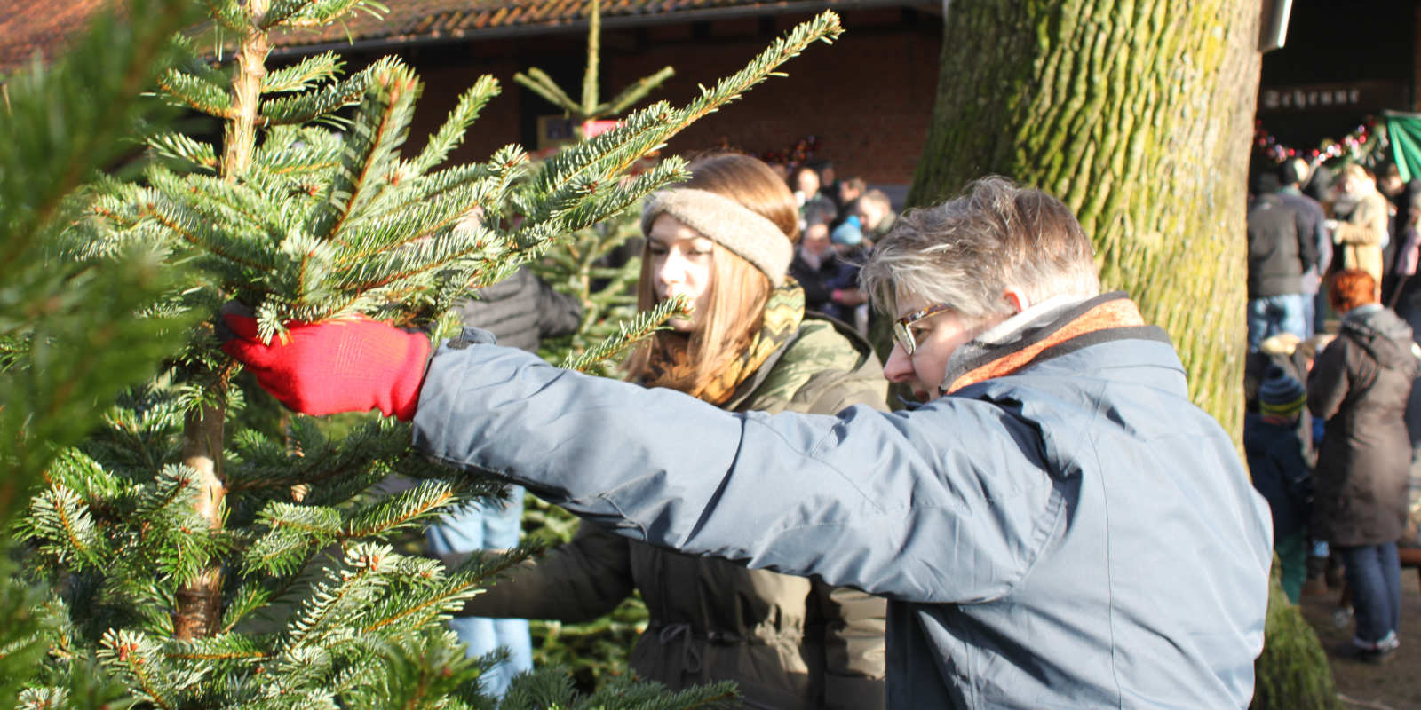 Wo Günstig Weihnachtsbaum Kaufen.Weihnachtsbaum Verkauf Tannenbaum Selber Schlagen In Schonung